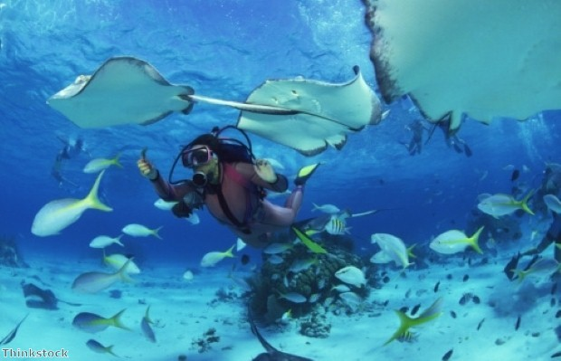 Under the sea: great diving travel deals