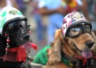 The Rio Carnival has gone to the dogs - literally (photo: CHRISTOPHE SIMON/AFP/Getty Images)