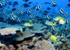 Life on the Great Barrier Reef