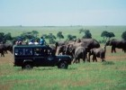 The Maasi Mara, Kenya, is a good place to see the 'big five'