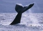 Travellers can see whales off the coast of Colombia