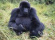 Acacia Africa is offering late Diamond Jubilee discounts on many of its Uganda focused overland expeditions
