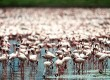Hang out with the flamingos in Yucatan, Mexico