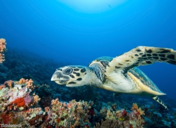 Conserve marine life with volunteer travel