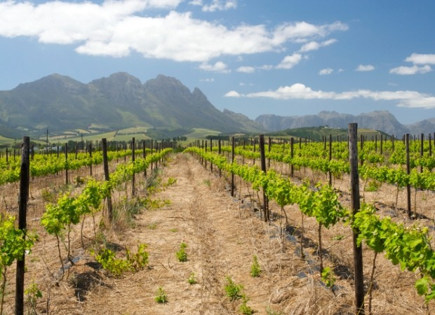 Discover South Africa's Cape Winelands