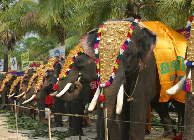 Enjoy Kerala's colourful temple festivals
