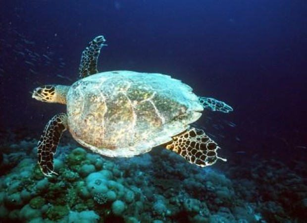 Go diving with turtles in the Seychelles