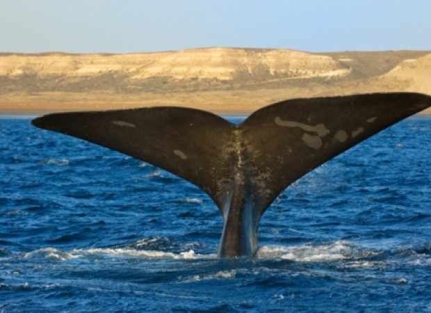Go whale watching in South Africa