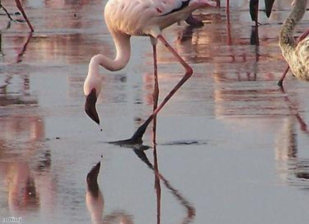 See flamingos at Coto Donana in Andalucia