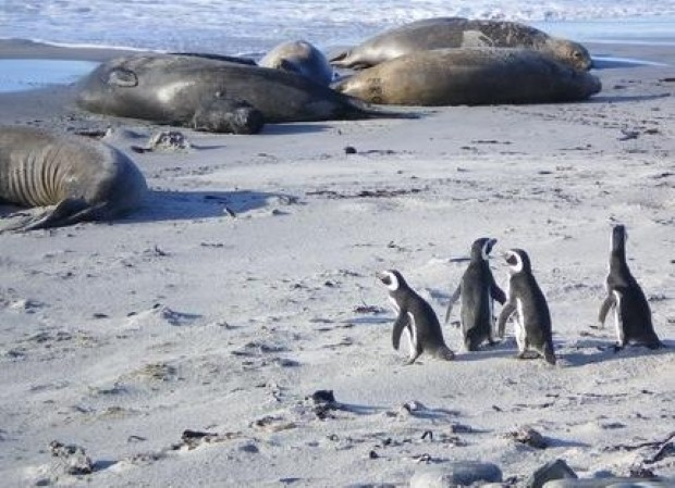 There is lots of wildlife in the Falklands