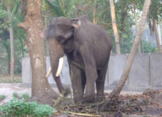 You can see Asian elephants in Goa