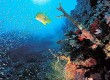 Explore underwater in Hurghada